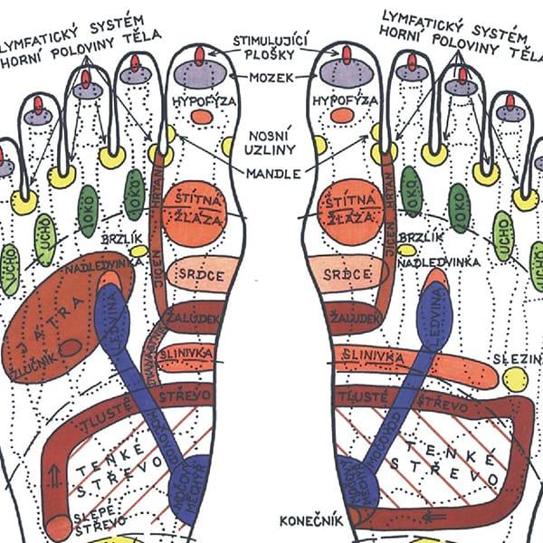 nohy vnitřní systémy